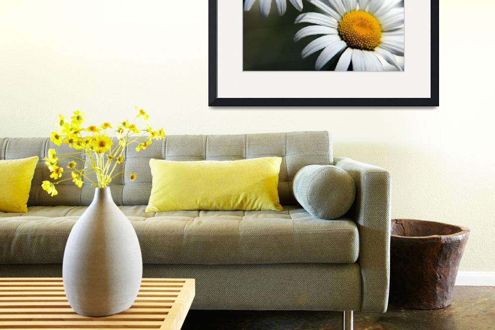 """""""Daisies""""  by daat_photography"""