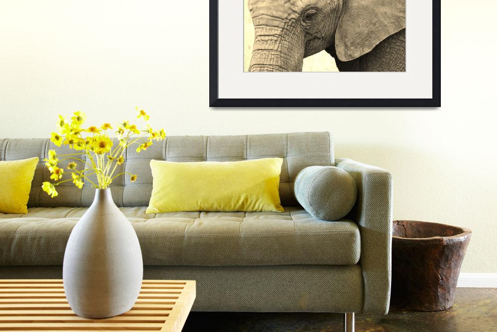 """""""Elephant&quot  (2014) by gallerymay"""