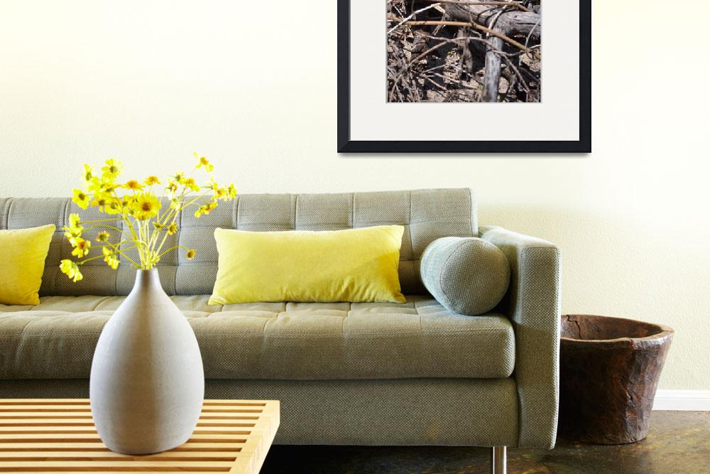 """""""Black Eyed Susan Flower in Driftwood on a Sand Dun&quot  by michellealexis"""