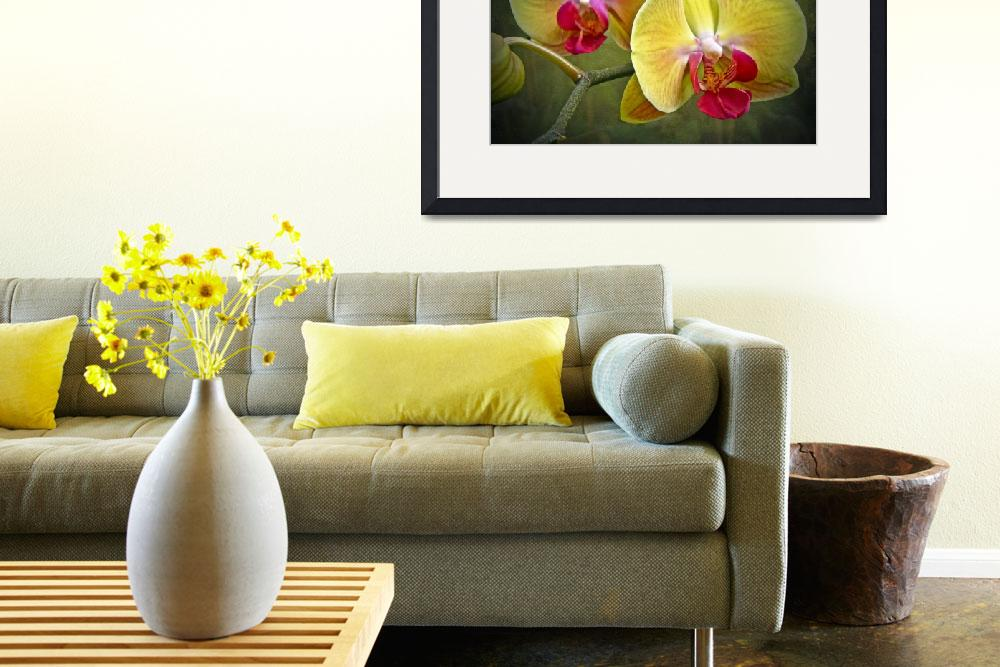 """""""Yellow Moth Orchid - Phalaenopsis&quot  (2013) by MotherNature1"""