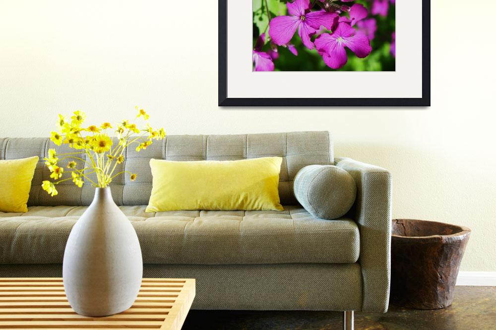 """Botanical - Honesty Lunaria - Outdoors Floral&quot  by artsandi"