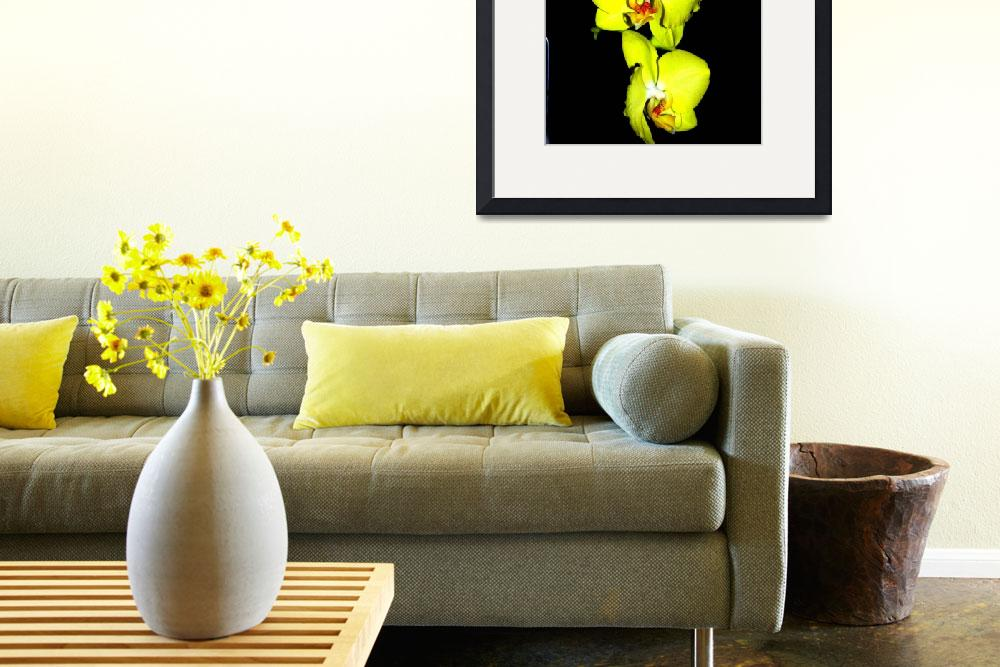 """Yellow orchid of Colombia""  (2014) by DanSteeves"