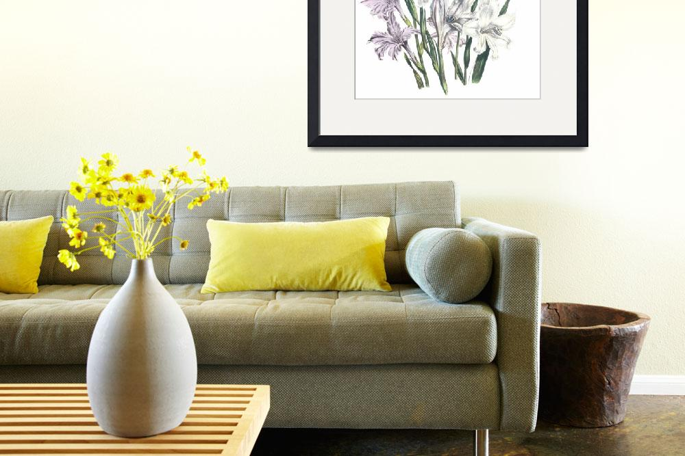 """""""Gladiolus Flowers by Jane Webb Loudon&quot  by ArtLoversOnline"""