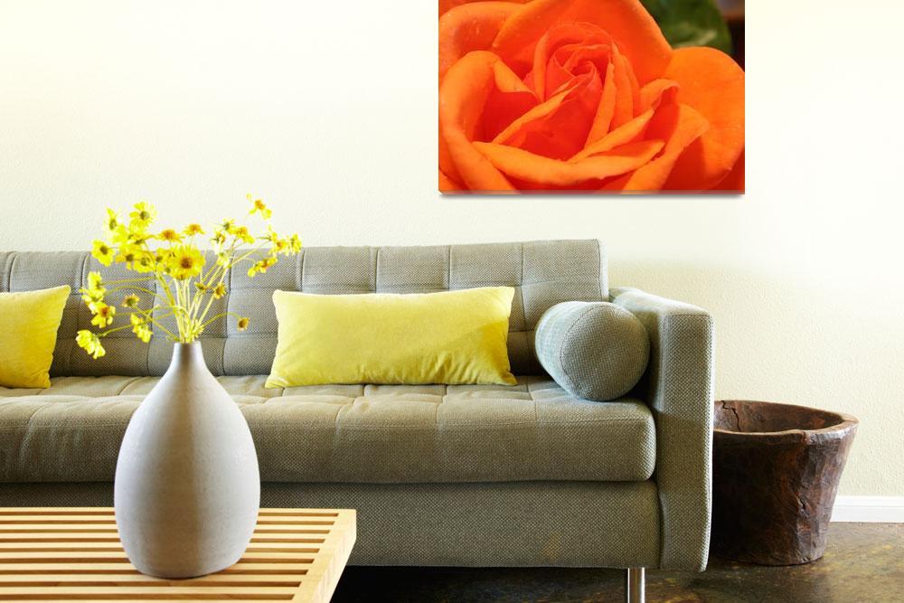"""Orange Rose""  (2005) by DestinysAgent"