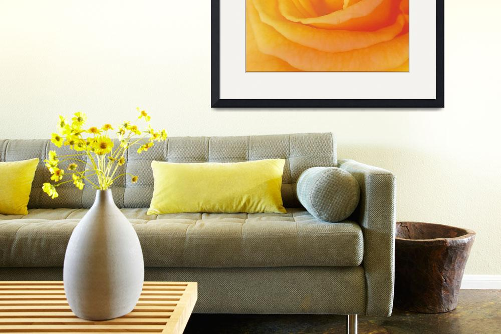 """""""Yellow Rose 4788&quot  (2010) by MGPPhotography"""