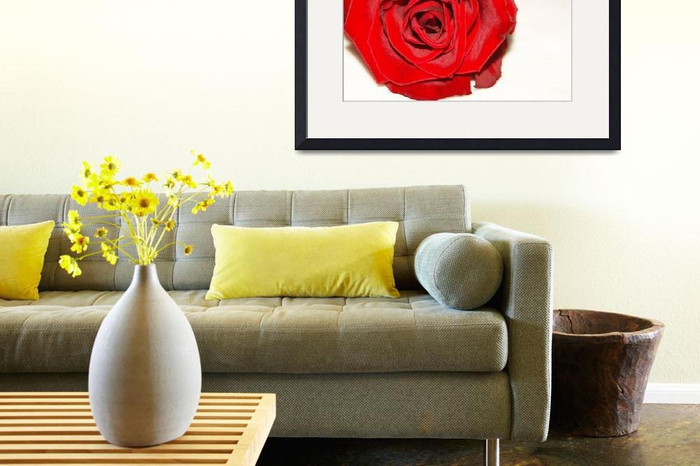 """""""Rose on Linen&quot  (2008) by ritzema"""