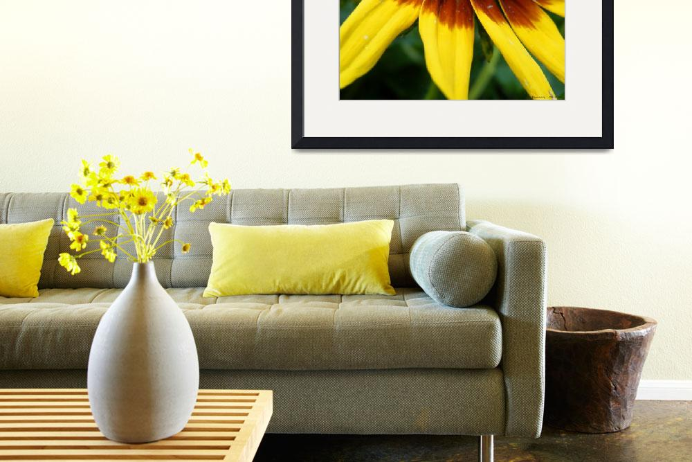 """""""Black Eyed Susan&quot  (2012) by Kimmary"""