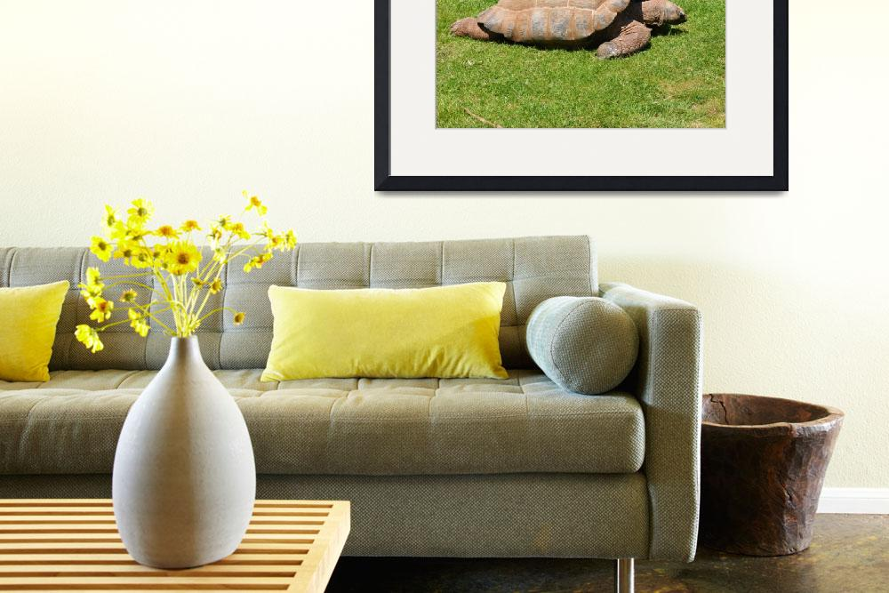 """GIANT TORTOISE&quot  (2009) by photomasteruk"