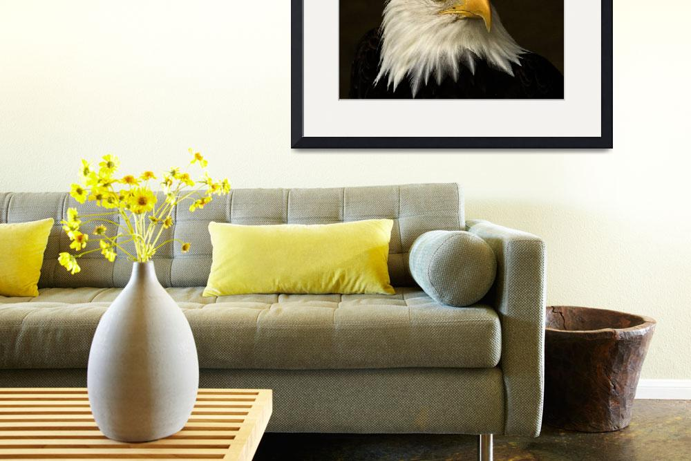 """""""Bald Eagle&quot  (2011) by MindsEyeImagery"""