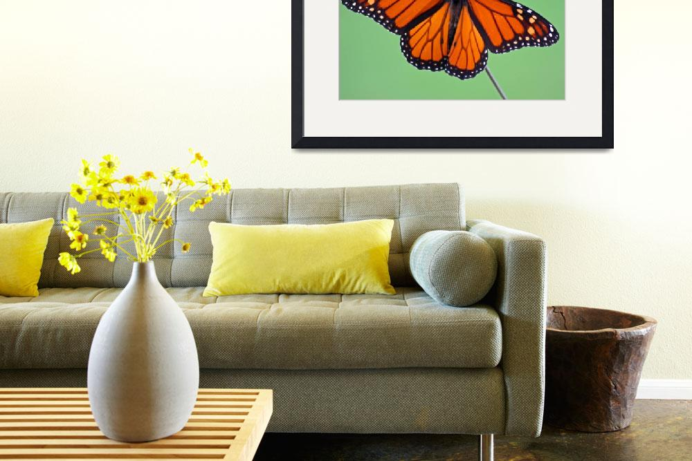 """Butterfly  Monarch""  (2011) by KsWorldArt"