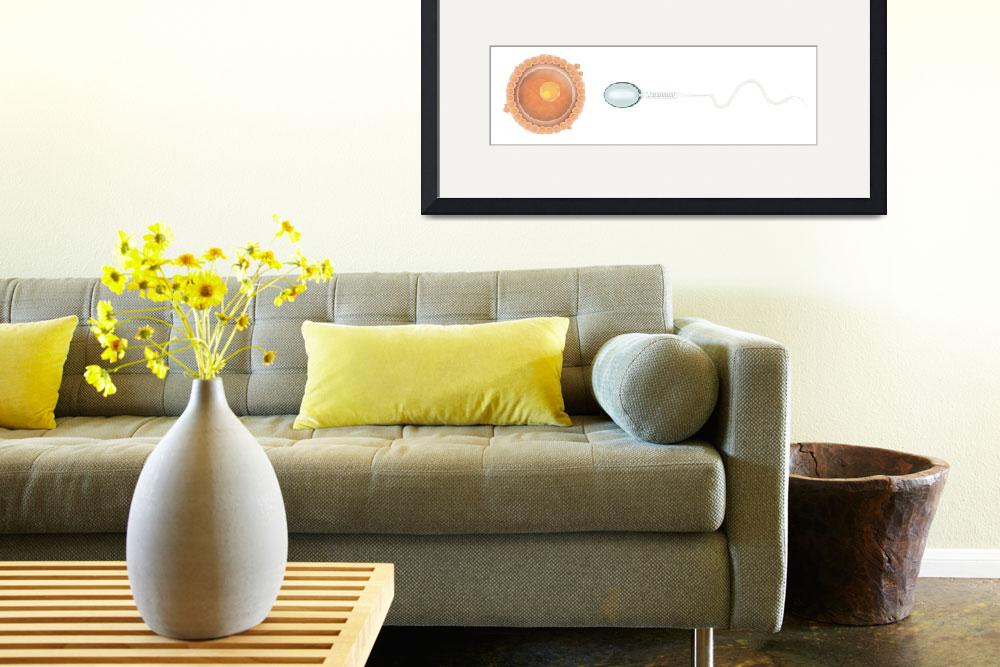 """""""Medical illustration of sperm and ovum&quot  by stocktrekimages"""