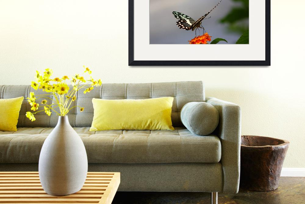 """""""Lime Swallowtail""""  (2008) by jdmphotography1"""