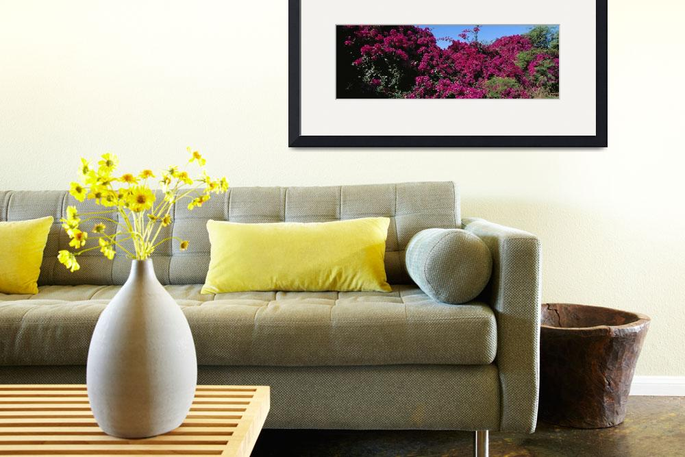 """""""""""Low angle view of Bougainvillea flowers, Hawaii""""&quot  by Panoramic_Images"""