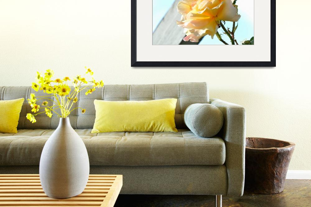"""""""Yellow white rose&quot  (2012) by Cativationart"""