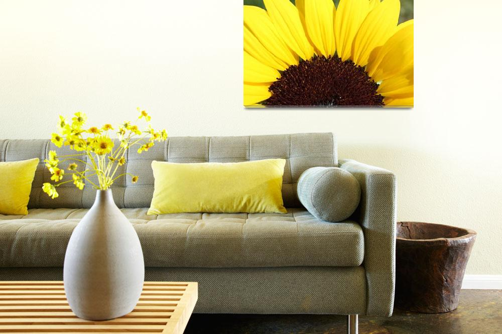 """""""Sunflower&quot  (2011) by Albertphoto"""