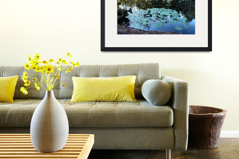 """Lilypad Pond&quot  (2010) by constellationphotography"