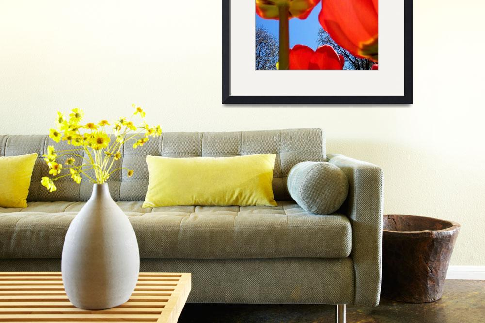 """""""Tulips in the Sun""""  (2010) by meaganjdesign"""