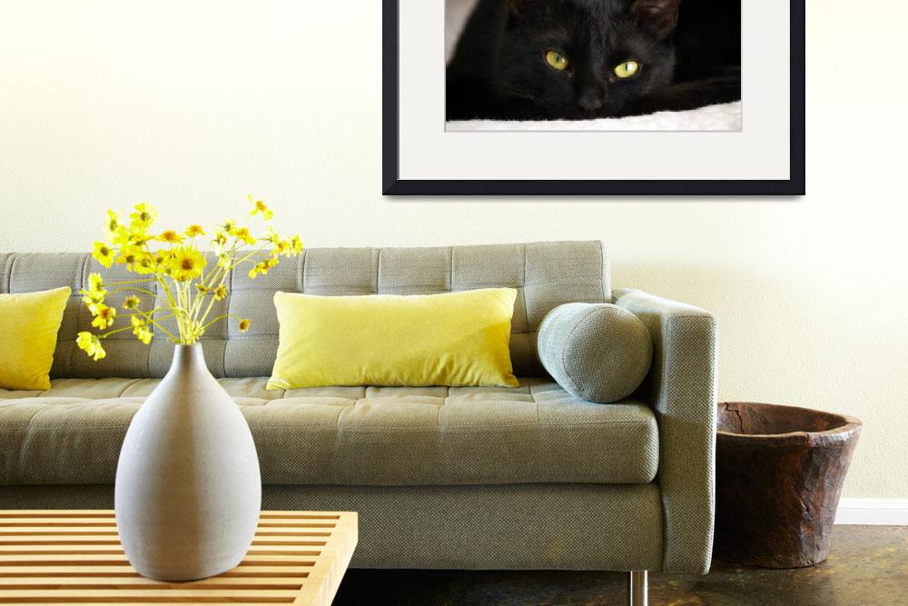 """""""cat - 4""""  by phoill"""