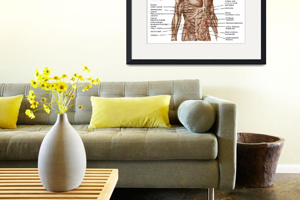 """""""Anatomy of human abdominal muscles""""  by stocktrekimages"""