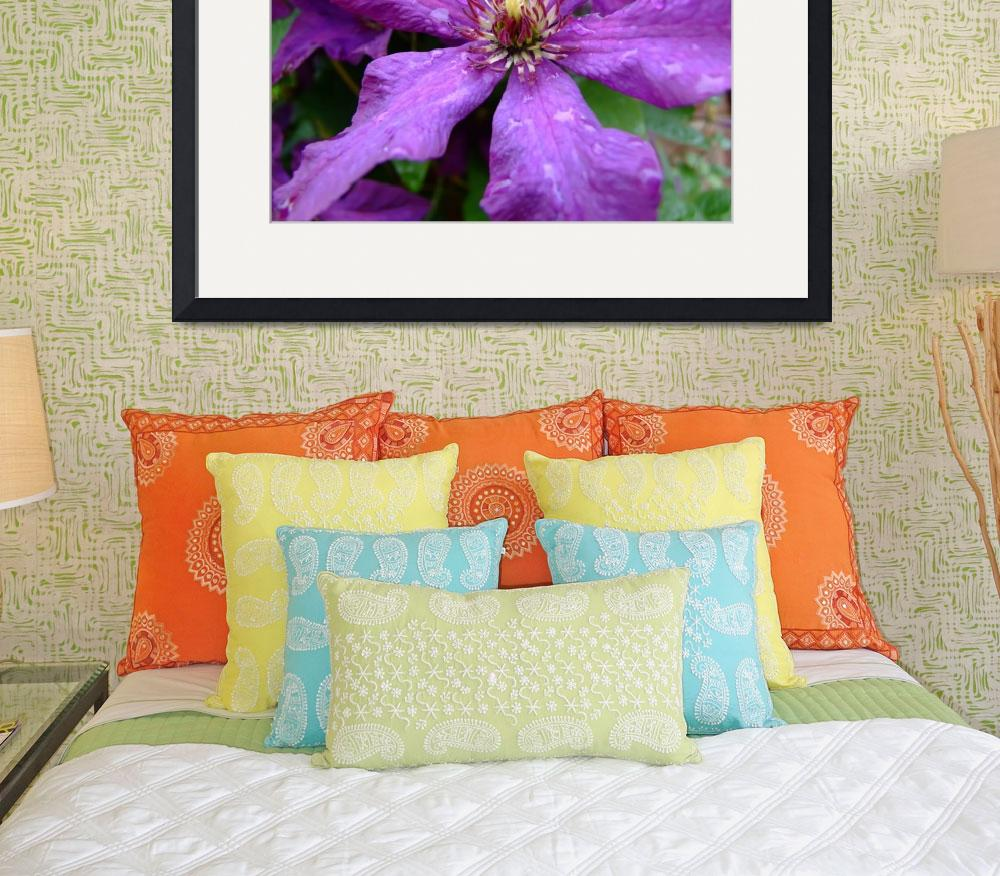 """Clematis&quot  (2007) by JamesSmart"