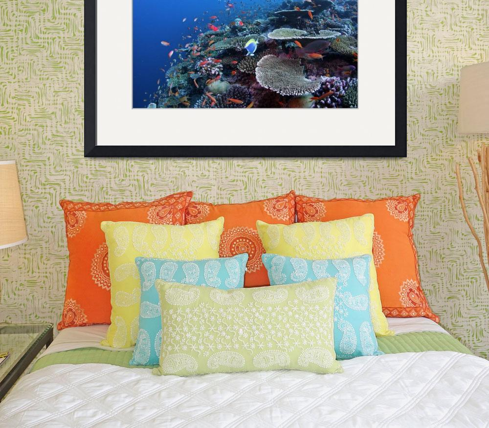 """""""Coral Reef HF070206107&quot  (2006) by howardwesleyhall"""