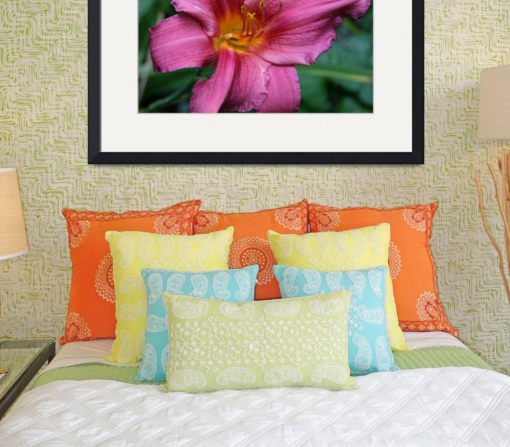 """Deep Pink Daylily""  by dreamwhisper"