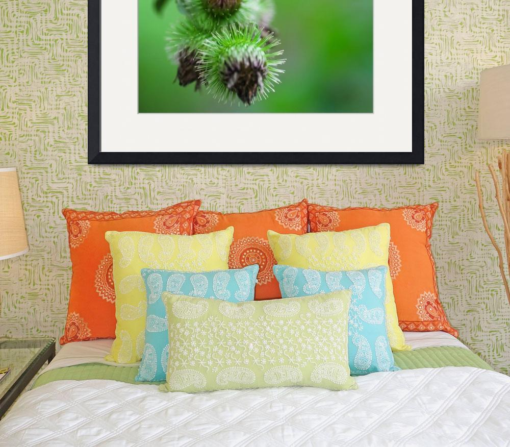 """""""Green Thistle&quot  (2011) by jchau"""