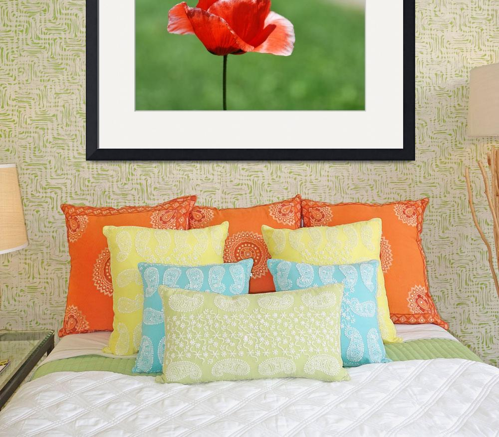 """""""One Loney Poppy&quot  (2009) by westwindranchcreations"""