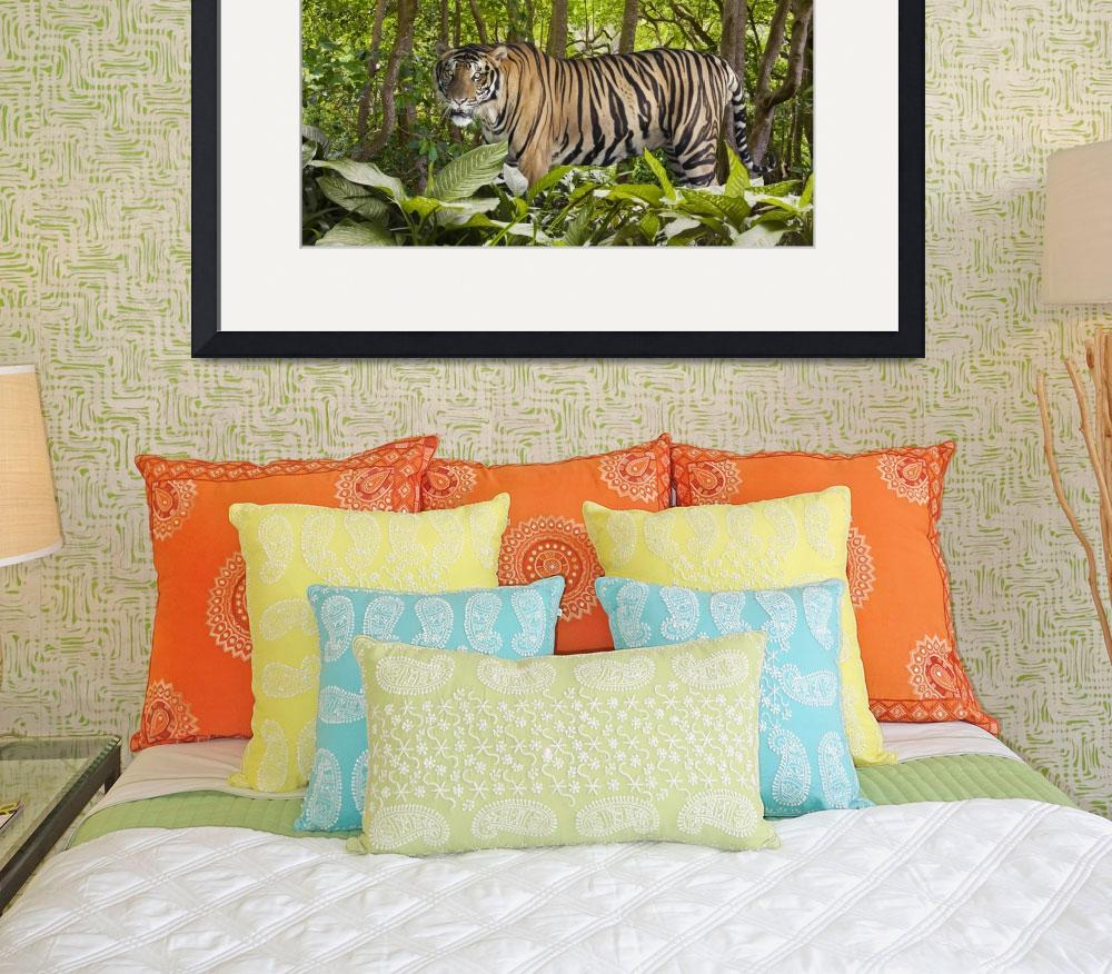"""""""Tiger In The Jungle&quot  (2011) by johnlund"""