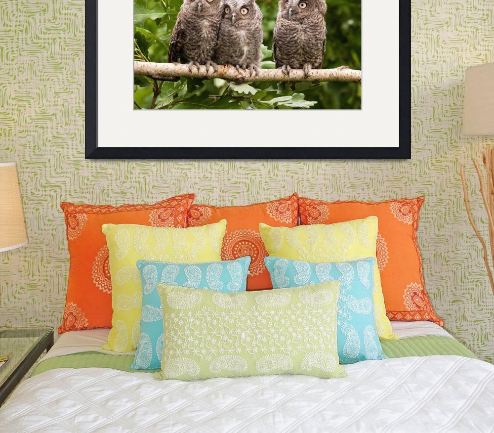"""""""Young Eastern Screech Owls""""  (2017) by AnswersFound"""
