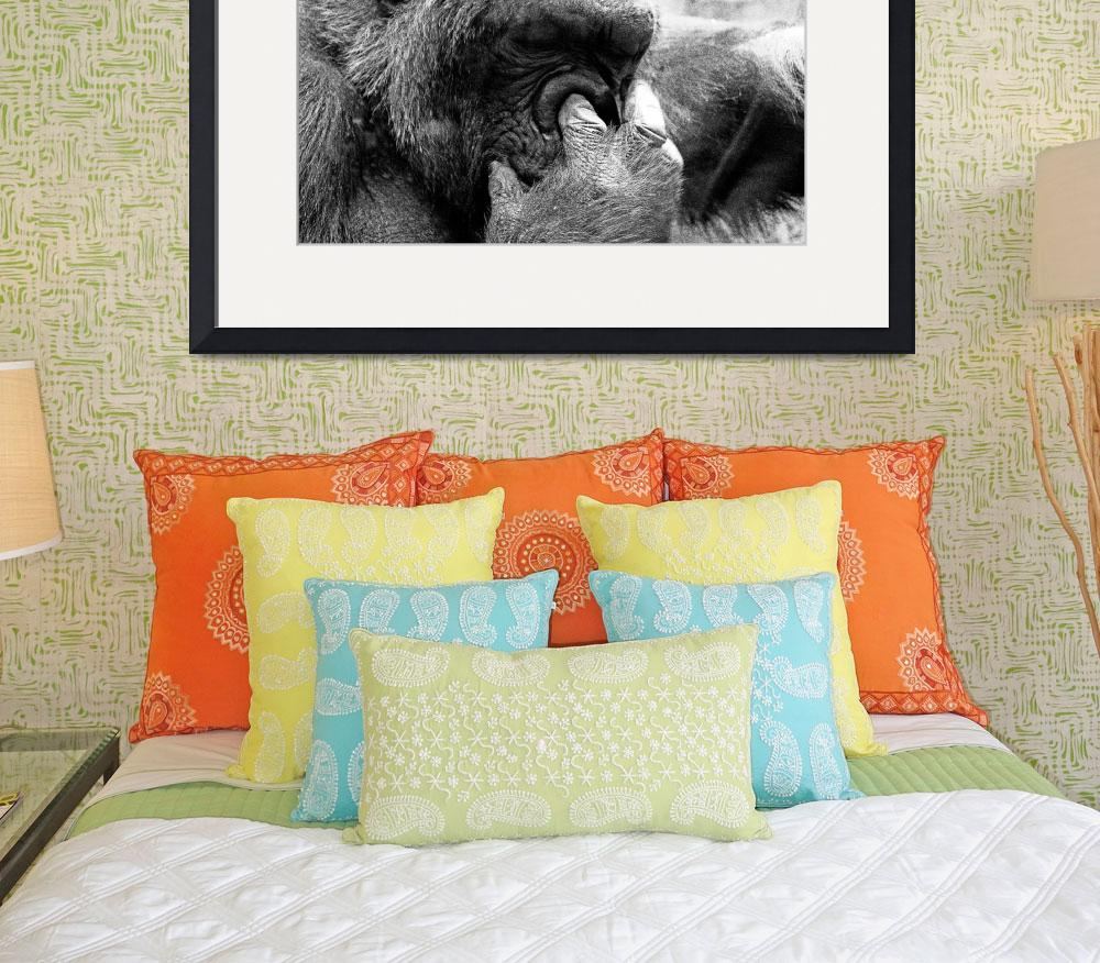 """""""Gorilla&quot  (2008) by photograph3r"""