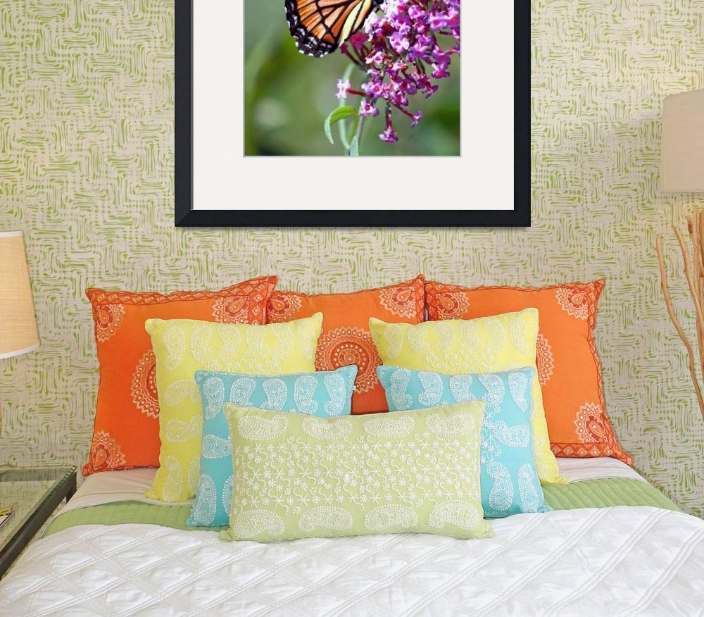 """Butterfly  Viceroy on Buddleja&quot  (2011) by KsWorldArt"