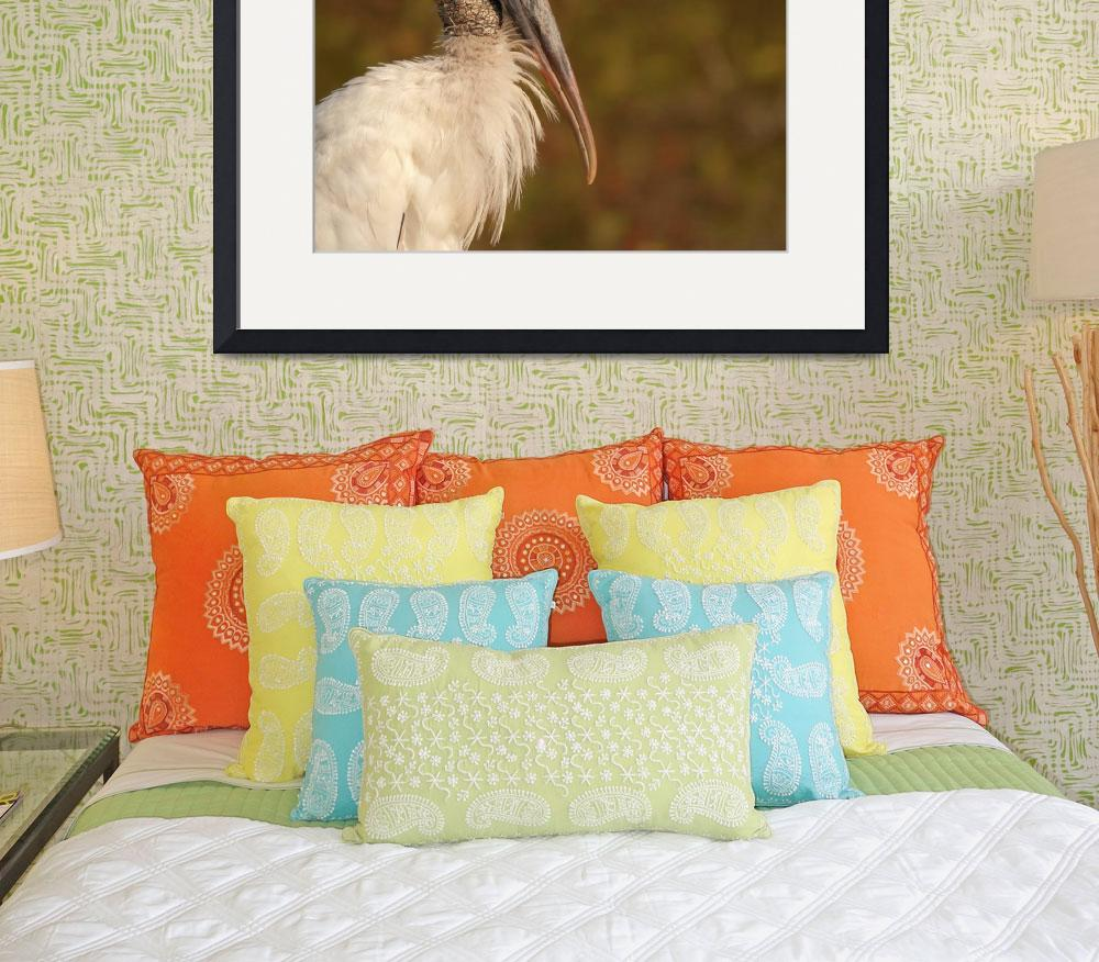 """portrait of a wood stork&quot  by PSimmons"