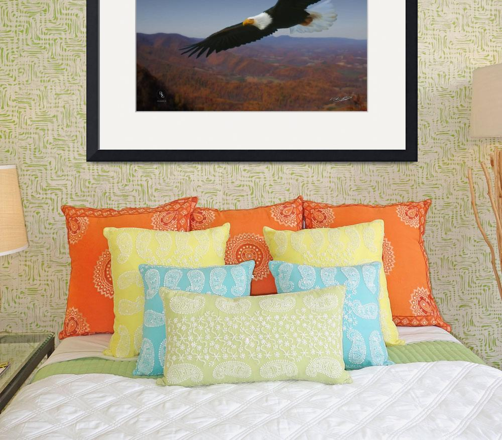 """""""Eagles Wings""""  (2012) by DSGImages"""