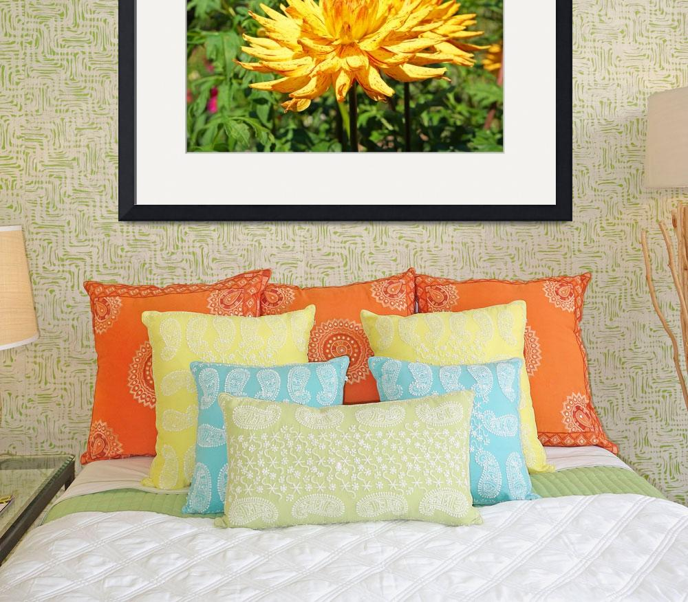 """""""Dahlia Flowers Art Prints Gifts Red Yellow Dahlias&quot  (2016) by BasleeTroutman"""