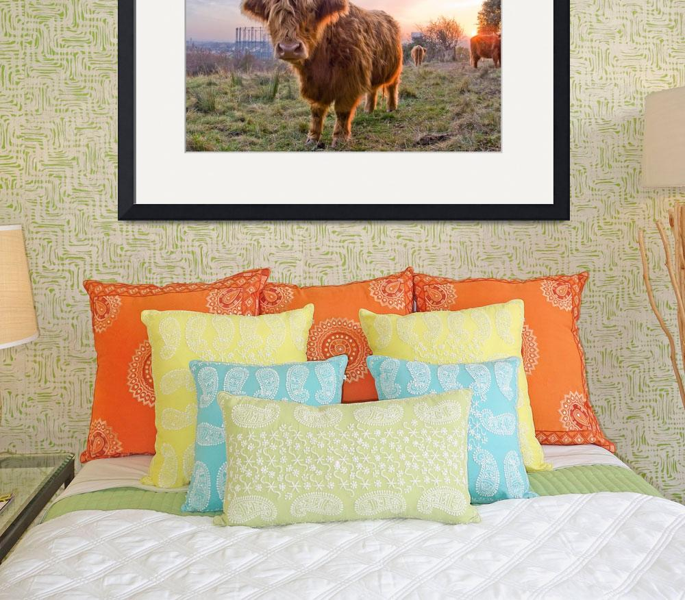 """""""Highland cows in the evening light&quot  by BenCooper"""