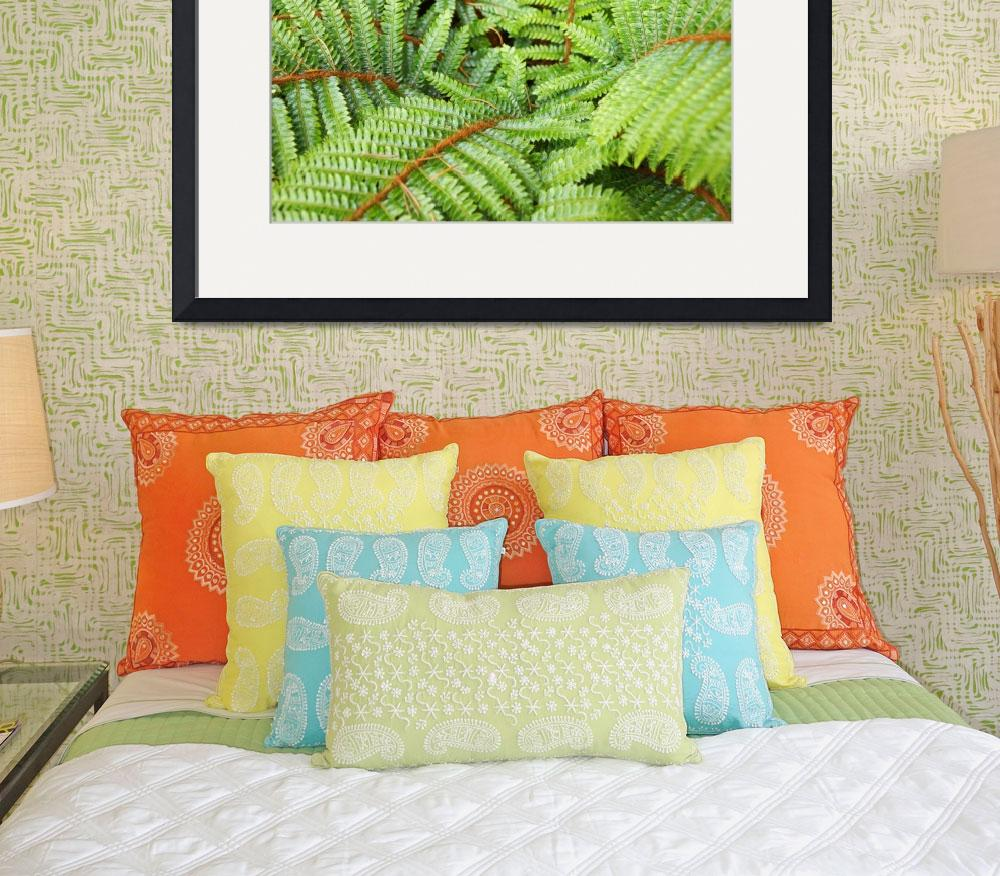"""""""Ferns Fronds Leaves Art Prints Forest Fern&quot  (2014) by BasleeTroutman"""