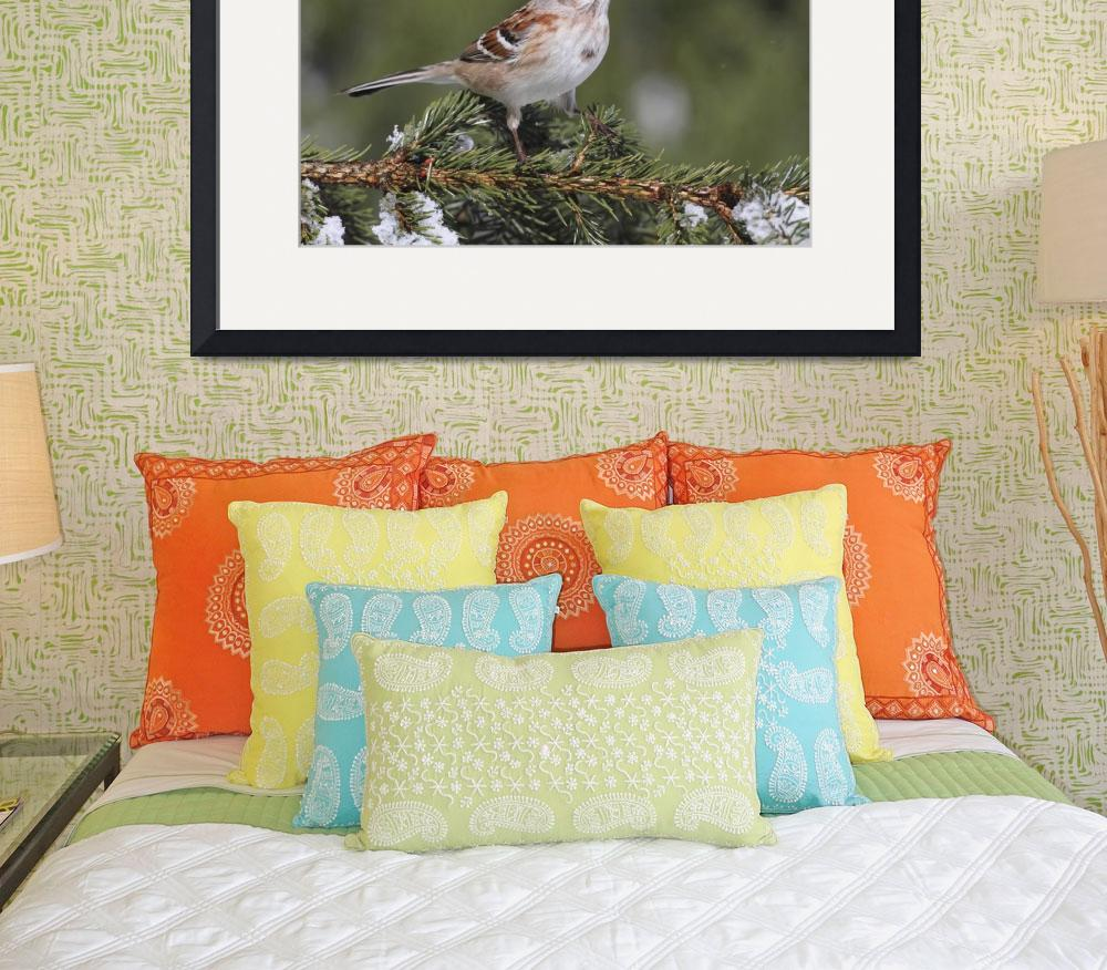 """American Tree Sparrow Photograph&quot  by ArtLoversOnline"