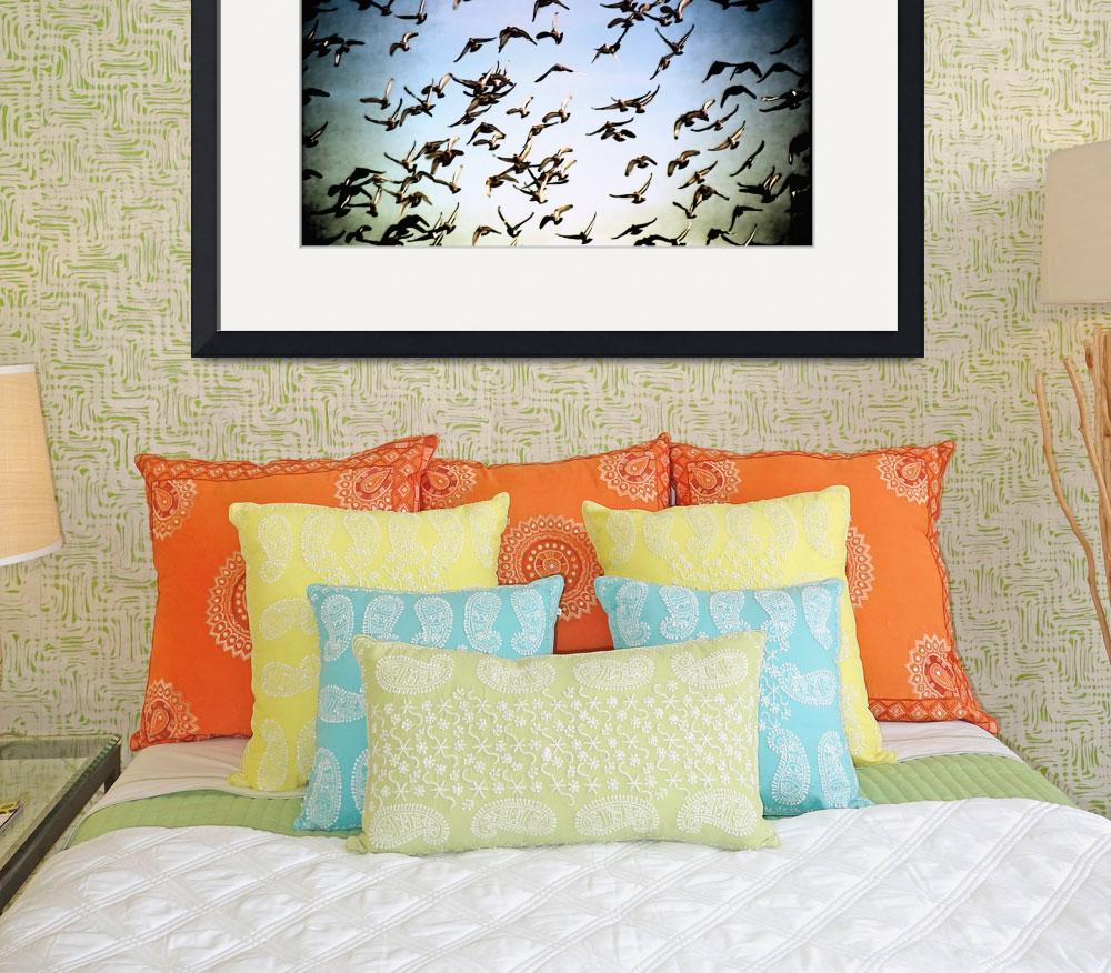 """""""Harbor Flock&quot  (2011) by PadgettGallery"""