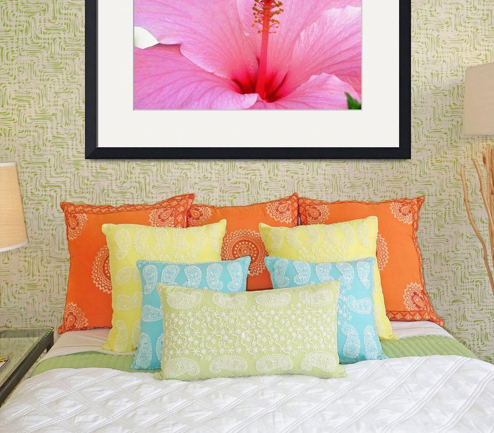 """""""Pink Hibiscus&quot  (2008) by mmcclain"""