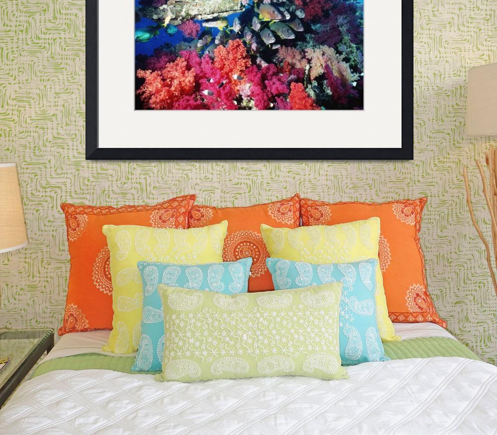 """Fish And Colourful Corals&quot  by DesignPics"
