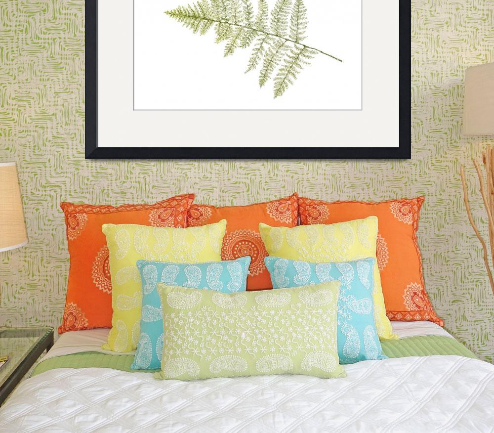 """Fern&quot  (2010) by ArtbyJudyNewcomb"