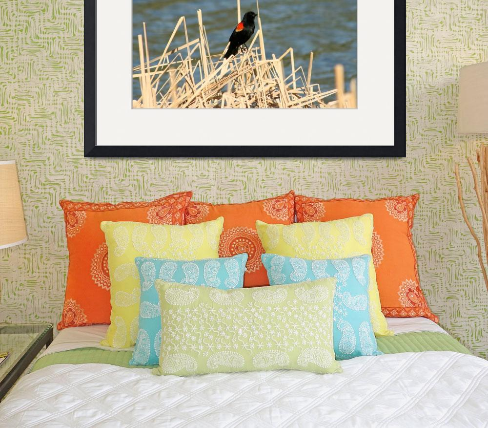 """""""Red Winged Blackbird Perched on Marsh Grass&quot  (2012) by rhamm"""