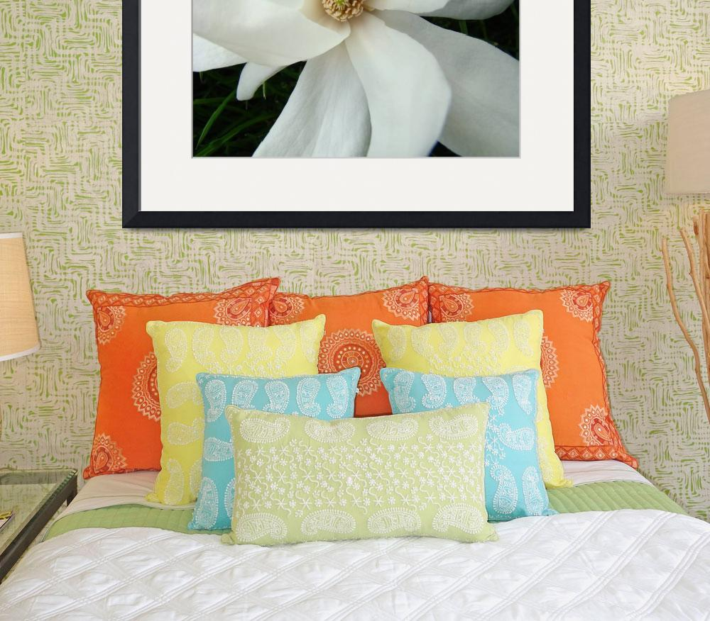 """Spring Magnolia Flower White Magnolia Tree Art""  (2009) by BasleeTroutman"
