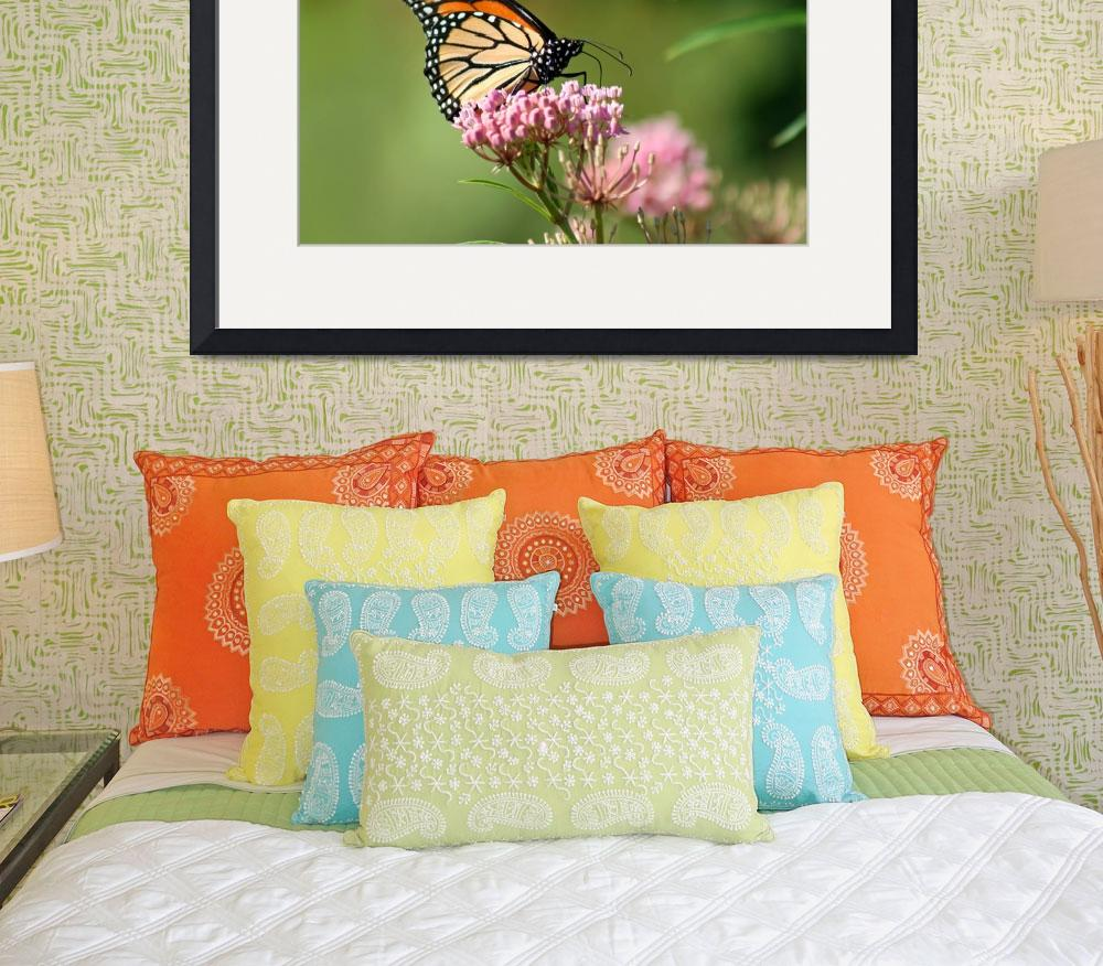 """Butterfly Monarch  Lepidoptera""  (2012) by KsWorldArt"