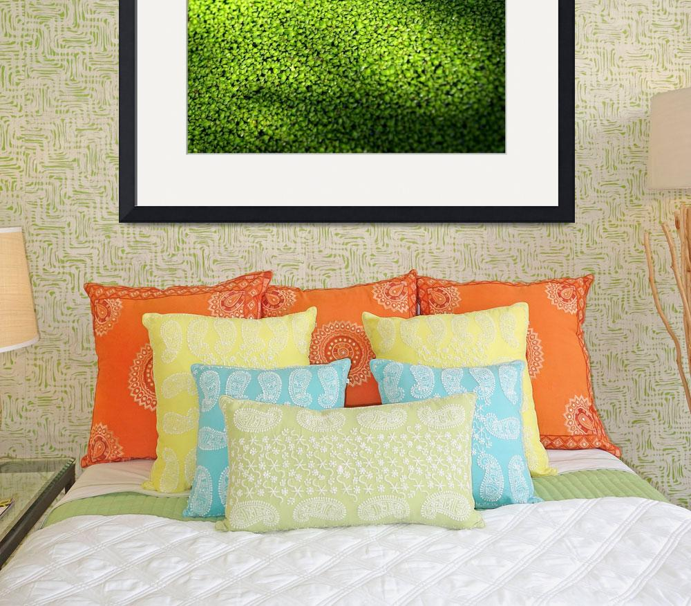 """""""Green Envy&quot  (2006) by ispyimagination"""