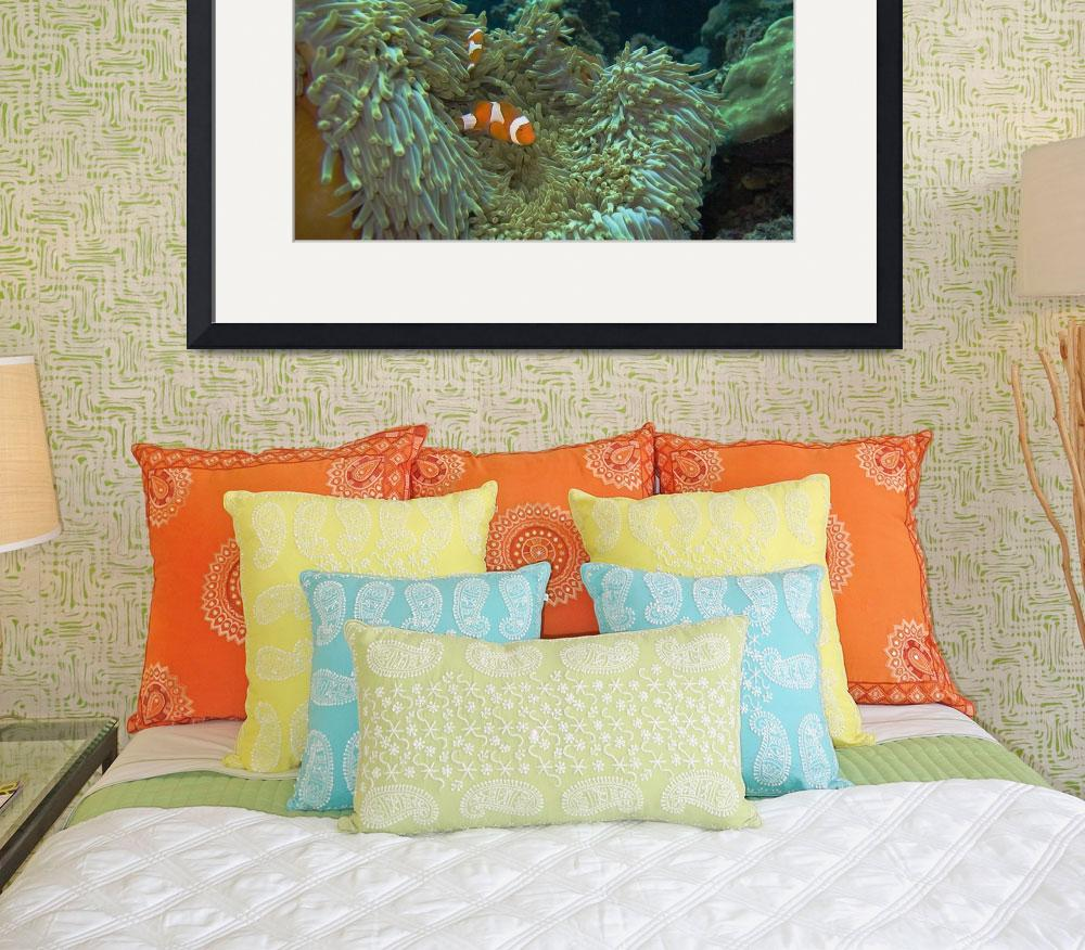 """Nemo at home&quot  by Mac"