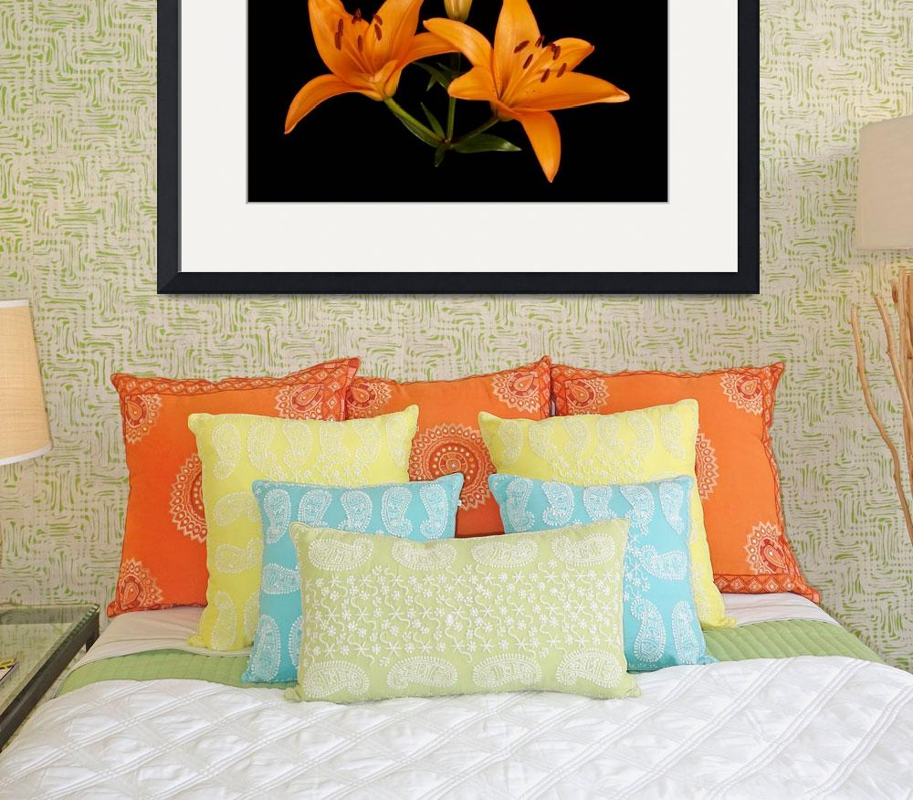 """Orange Lily&quot  (2007) by ToddMortonPhotography"