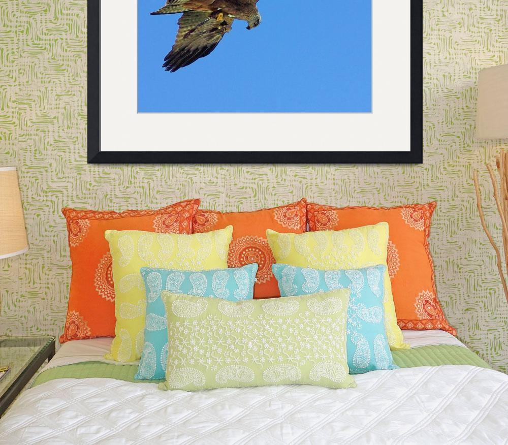 """Hawk Hovering over Prey&quot  (2010) by loversdream"