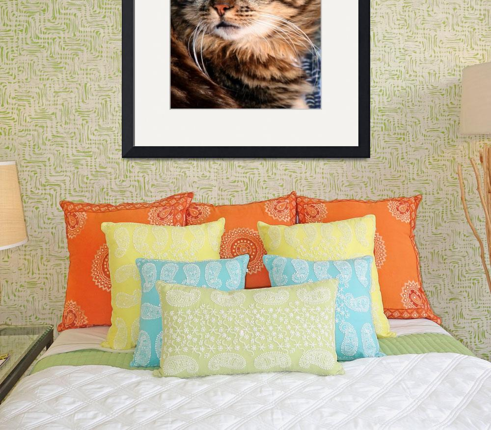 """""""Tiger Cat of Vernazza&quot  (2007) by DonnaCorless"""